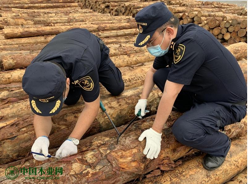全力保障市场供给 进口原木快速通关
