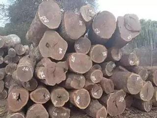 市面上俗称黑檀的主要包含哪几种木材?