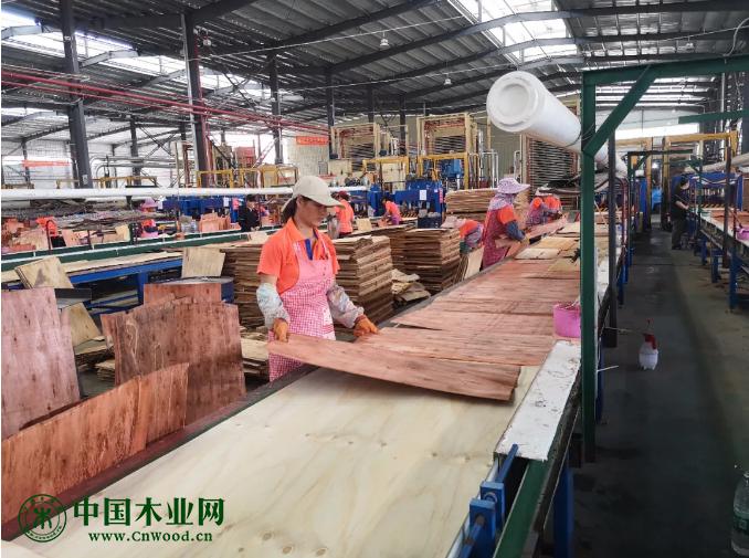"""来宾加快""""东融""""步伐 打造广西内陆高水平木材加工合作区"""