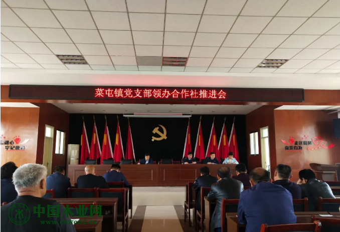 菜屯镇木材产业发展历程