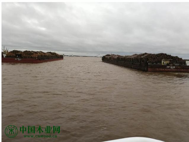 同江市充分发挥口岸通道优势 木材进口运量逆势增长