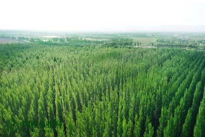 瑞典SCA在欧洲内陆谋求更多林地!