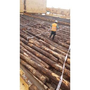 新西兰辐射松原木大量采购