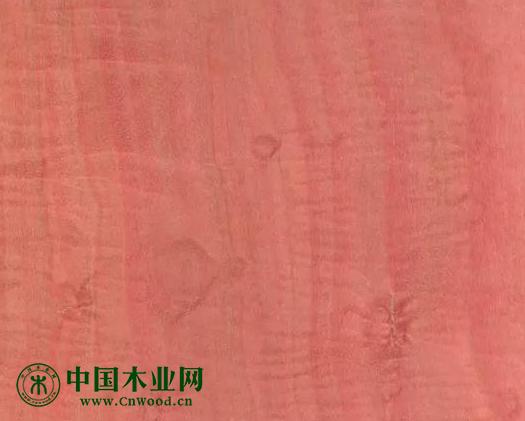 粉红象牙木