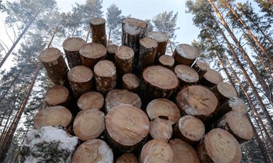 俄伊尔库茨克州成功制止大规模木材走私