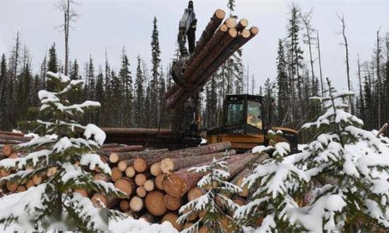 俄专家:俄禁止出口未加工木材将鼓励中国投资者在俄境内开办加工厂