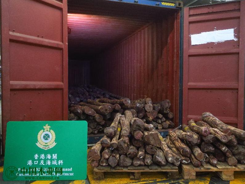 香港海关破获今年最大宗走私受管制紫檀木材案件