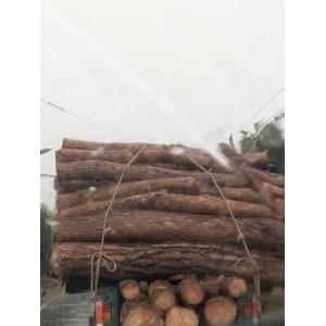 大量供应原松木