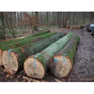 比利时白橡木原木