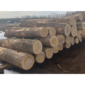 比利时卢森堡白蜡木原木