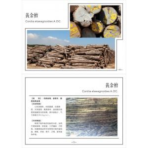 供应黄金檀原木