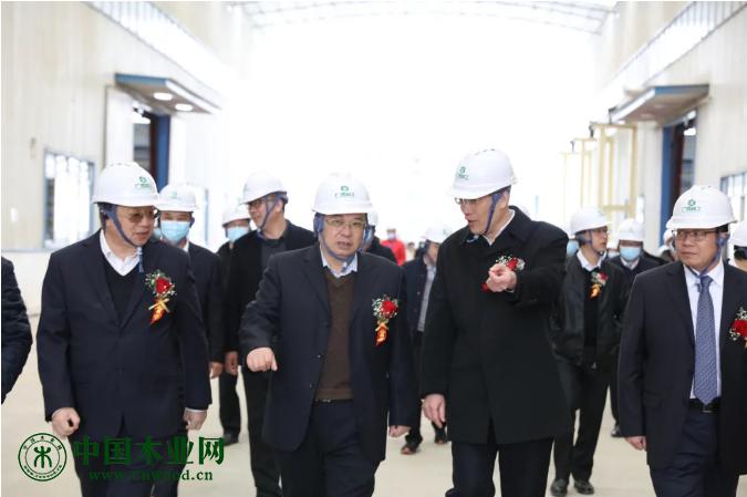 中国首条自动化胶合板生产线项目正式投产