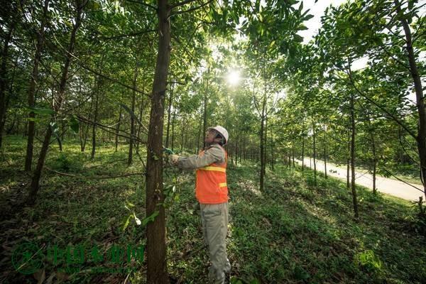 恒行2登录测速地址越南林木业2021年目标实现木材及木制品出口达140亿美元