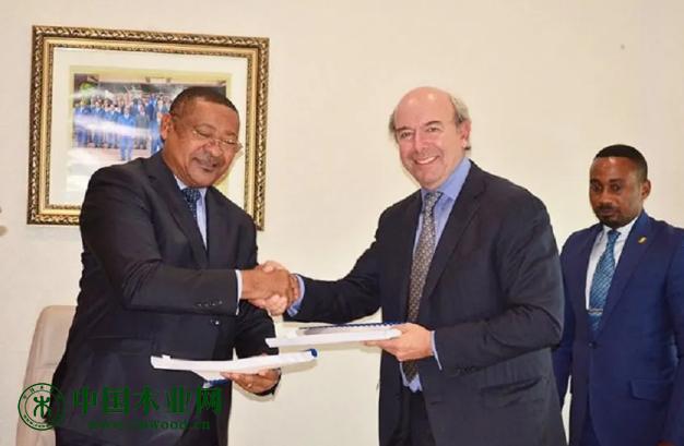 恒行2登录测速地址加蓬政府意向重启尼扬加省大马永巴木材加工产业基地建设