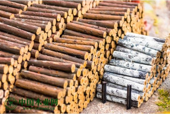 恒行2登录测速地址江苏新民洲港累计进口木材超365万m³