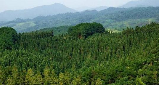 永安林业再次涉嫌信息披露违规,被立案调查!