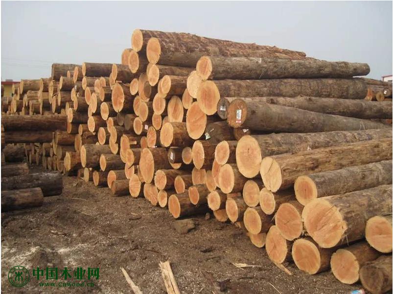 一季度兰山区木业板材行业完成地方级收入5.05亿元