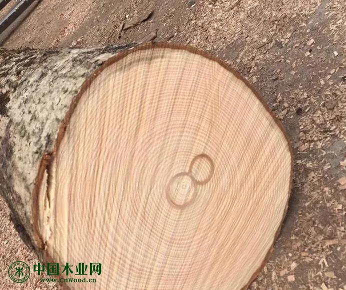 越南从欧盟进口的白蜡木不断增加