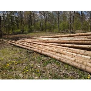 6级欧洲云杉原木期货