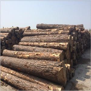 【厂家直供】樟子松原木 防腐木 碳化木 松木板材 加工定制