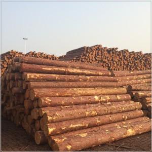 批发落叶松原木小杆 河道打桩松木桩 煤矿柱 防腐枕木垫木
