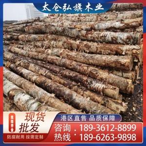 定制俄罗斯桦木原木 枫桦白桦 旋切材 板材 家具材 质优价廉