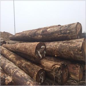 批发细纹铁杉欧洲云杉原木 可用于户外景观工程木方定尺加工