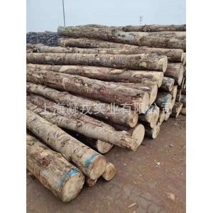 【厂家供应】新西兰杨木原木 包装箱托盘适用木材 家具实木板