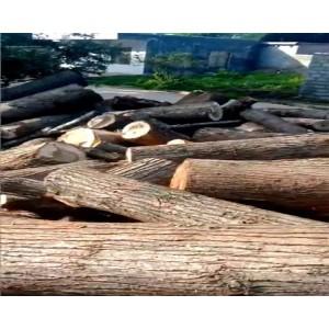 贵州省威宁县大量杨木出售