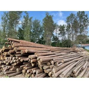 杉木打桩材,木方