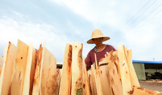 河北滦南:木材加工富农家