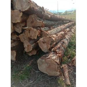 大量杉木供应,一手货源